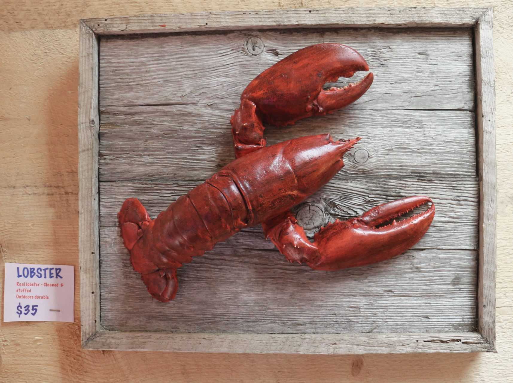 stuffed lobster on driftwood frame,$35.